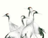 Watercolor Artwork Four Cranes Fine Art Print from Original Watercolor