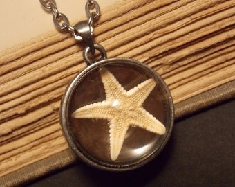 Starfish Under Glass Necklace