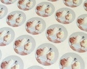 "Chickens Stickers Birds in Hats Cute Chicks in Hats Stickers Seals 1.5"" Round (12)"