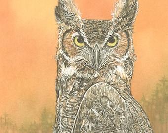 Great Horned Owl - print of Original watercolor