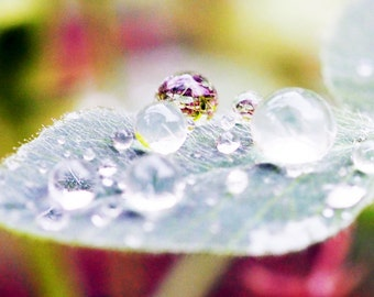 Charity of Your Choice, World Within a World, raindrop