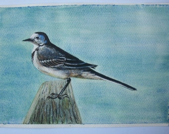 White Wagtail bird Watercolour on paper original painting