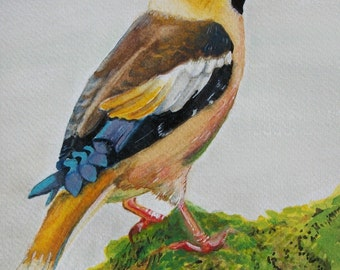 Grosbeak bird Watercolour on paper, original painting