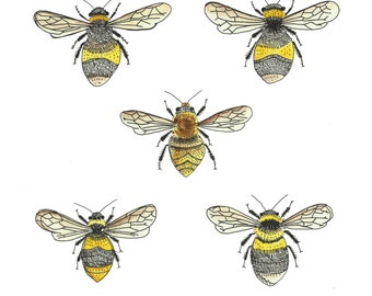 British bees natural history illustration print