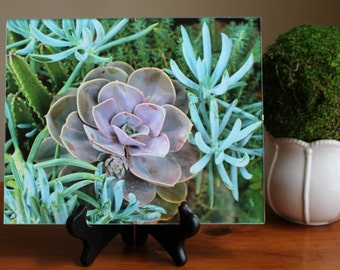 Framed Succulent Plant Print with Stand