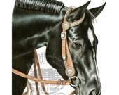 Black Quarter Horse Mare Portrait in Colored Pencil
