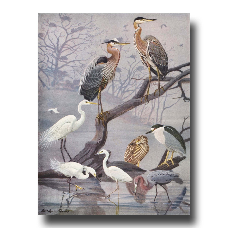 Heron Print Bird Wall Art Vintage Bird Illustration Antique