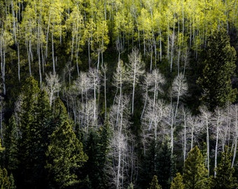 Aspen Trees Spring Forest Green Leaves Mountain Meadow Colorado Rustic Cabin Lodge Photograph