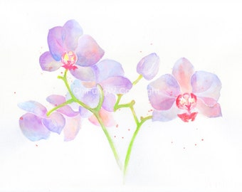 Fine art watercolor painting, flower art, purple, pink, Orchid,  WATERCOLOR PRINT, giclee print, flower interest