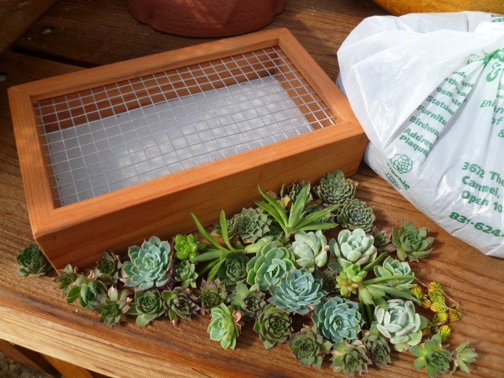 Succulent vertical gardening kit planter cuttings as for Garden design kits