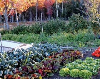 Autumn Garden Seed Collection - 7 Plant-types, 650 seeds (Organic/non-GMO)