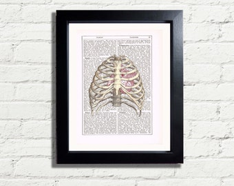 Anatomy Diagram Skeleton Rib cage Anatomical Heart Wall Art Print INSTANT DIGITAL DOWNLOAD A4 Printable Pdf Unique Home Decor Wall Hanging