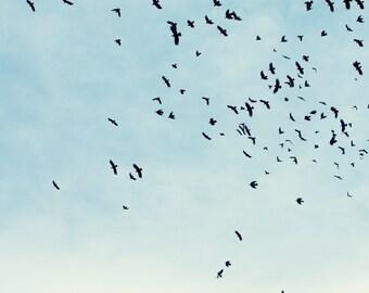 Birds in Flight Soaring Freedom Color Photographic Art Print