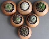 Teak Wood Planters (Pebble Shape) / Handmade for cactus and succulents