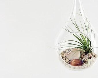 """Air Plants Tillandsia DIY Terrarium Kit """" Desert Juncifolia """" by Joinflower Joinfolia"""