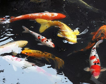 Watercolor Koi Swimming Pond California Chinese Goldfish Japanese Tea Garden San Francisco Fine Art Print Photography Digital Painting