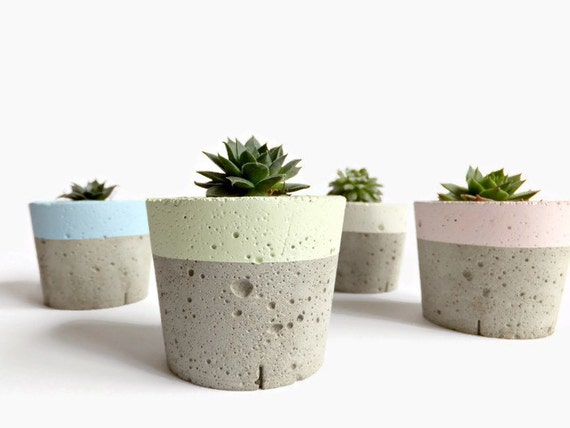 Mini Concrete Planters : Pastel concrete mini planter for succulent home decor modern