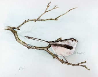 Bird painting:  Long-tailed tit. Print of a watercolour painting by Jan Taylor.