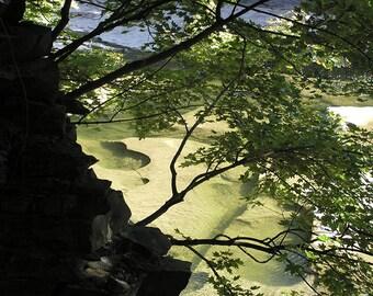 Zen Landscape Tree Art Photo,Zen Landscape Tree Picture Photograph,Picture of Trees,Photo of Tree,Tree Photo,Tree Wall Art,Asian Style Photo