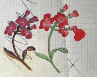 Study of red flowers