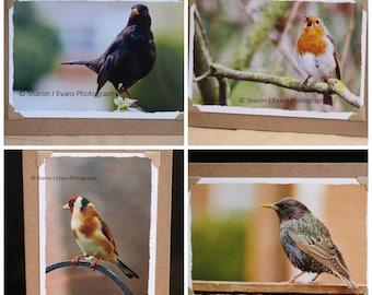 Photo note cards, set of 4 wild birds, handmade cards, greeting cards, photographic cards, photo prints, 7 x 5 photo stationery, blank cards