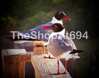 "Seagull Photo - Hatteras Seagulls Photo - NC Wildlife Photo - North Carolina Seagulls - Instant Download - ""Balcony Gulls"""