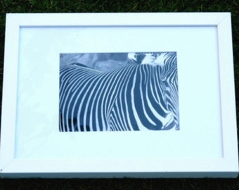"Foto im Rahmen ""Close up Zebra"" / framed picture ""zebra close up"""