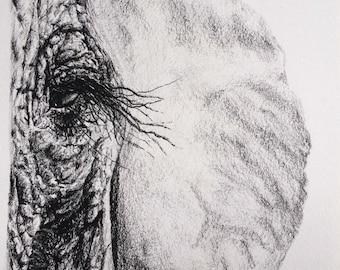 Original Charcoal Elephant Drawing No. 1