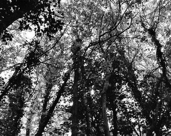 England // Bristol Forest