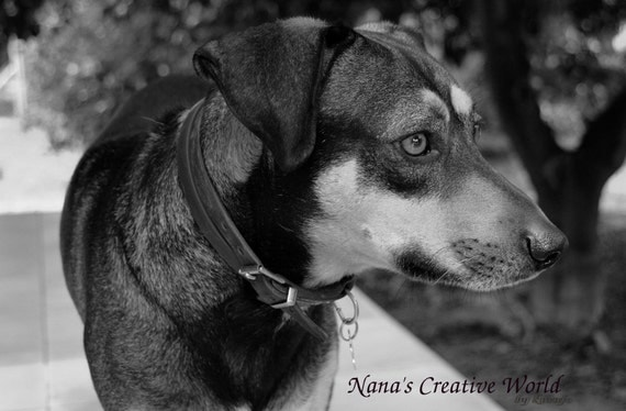 Dog photography - Instant digital download photography - close-up photography