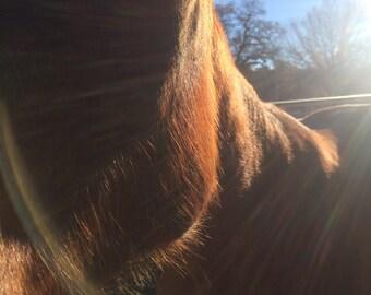 Saddle Around