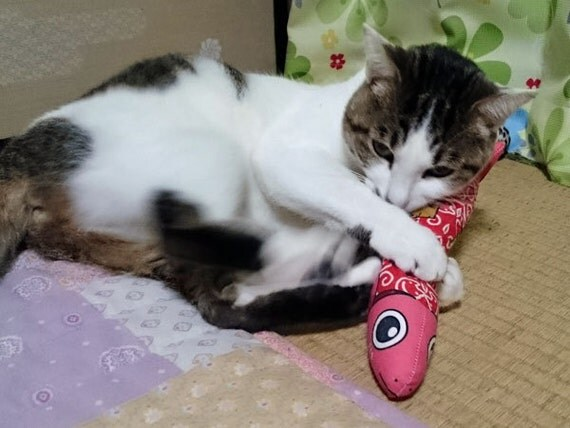 Kitty Cat Toys 20