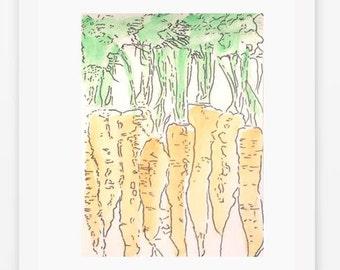 Watercolor sketch of Carrots