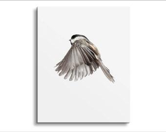 Wild Birds Flying