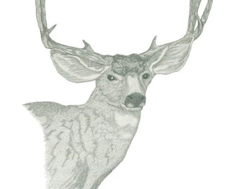 Artwork Giclee Pencil Sketch Mule Deer Titled-George
