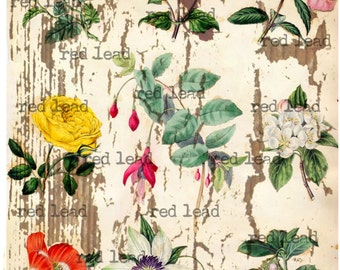 "Digital Antique Flowers Collage Sheet - 8-1/2"" x 11"" - Vintage Elements 73"