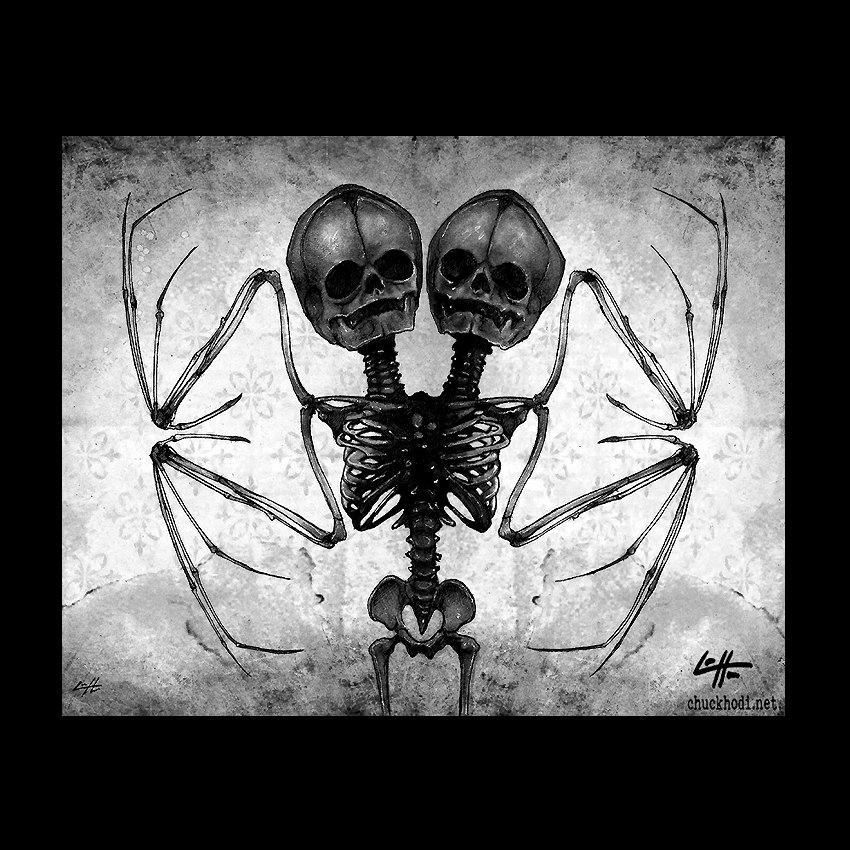 Bat wing skeleton - photo#51
