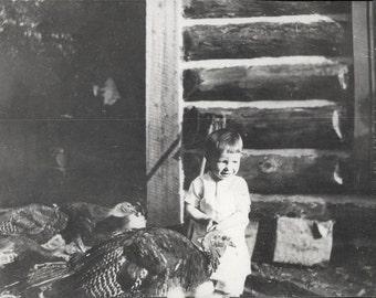 vintage photo 1911 Little Boy Delighted among The Turkey Birds