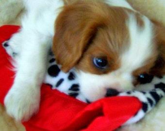Pet Blanket, security:  Minky custom pet quilt with satin edge14x20 inch, furry friend!