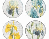 Iris Botanical Flowers Magnets or Pinback Buttons or Flatback Medallions Set of 4