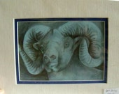 original art  pencil  drawing big horn sheep