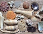 FROM FLORIDA with love...natural beach finds ~ stone coral shell stone ~ craft supplies ~ art