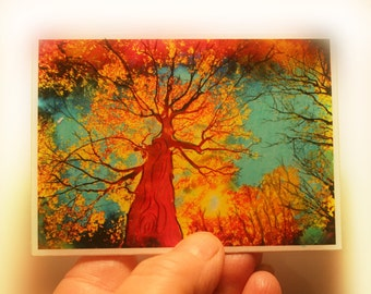 Night sky, aceo original, 2.50x3.50, Fine art photograph, Autumn trees, Fall decor, woodlands, Nature decor,Home decor, wall art