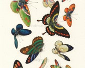 Chinese Plate of Butterflies Lepidoptera 19th Century Reprint Home Decor Wall Art