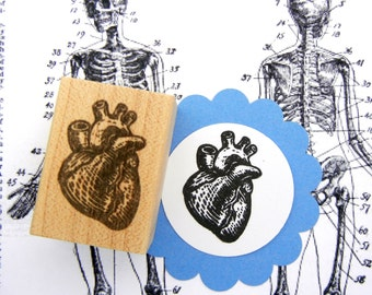 Anatomical Heart Rubber Stamp - Handmade rubber stamp by Blossom Stamps