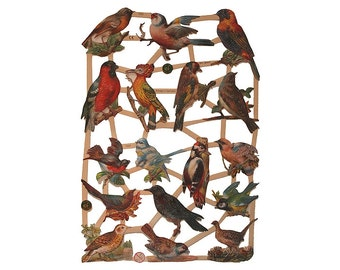 Germany Paper Lithographed Die Cut Scraps Fancy Colorful Birds  7323
