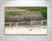 Bird Art, Nature Photography, Fine Art Print, Wetlands Picture, Bird Art, Modoc, Klamath, Serene Art, Wildlife Art, Reeds, Cattails