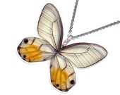 Real Butterfly Wing Necklace / Pendant (WHOLE Haetera Piera aka The Yellow  Translucent  Glasswing W078)