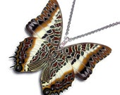 Real Butterfly Wing Necklace / Pendant (WHOLE Charaxes Brutus - W028)