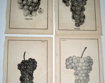 4 Victorian Ephemera - Book Plates - Grapes